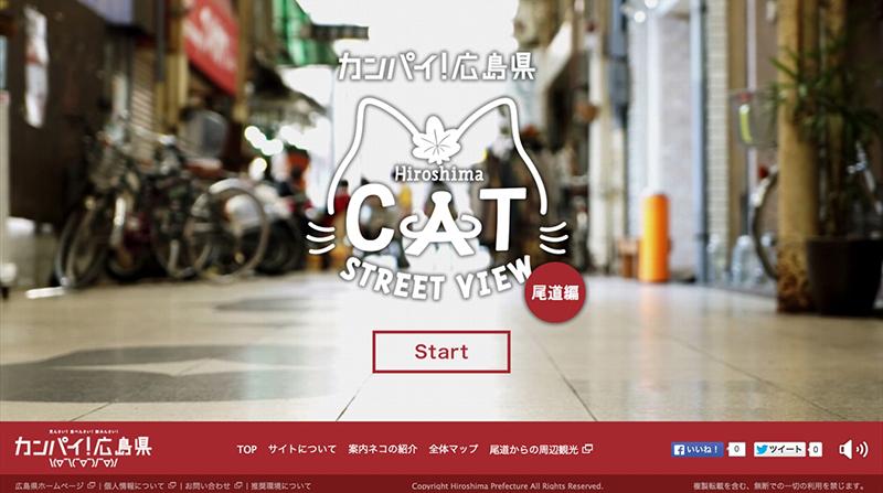 cat_002_800px
