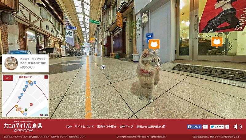 cat_003_800px